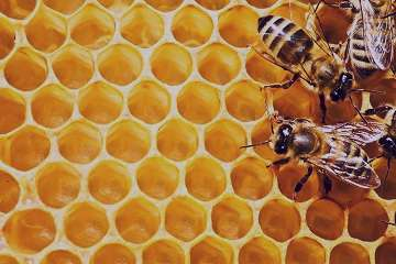خواص عسل,خواص عسل و دارچین,خواص عسل طبیعی,خواص عسل گون