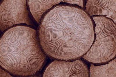شعر در مورد چوب