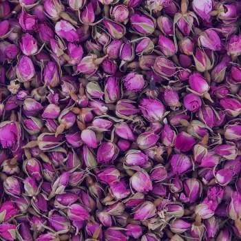 آشنایی با خواص بسیار زیاد گل محمدی با ماست برای پوست