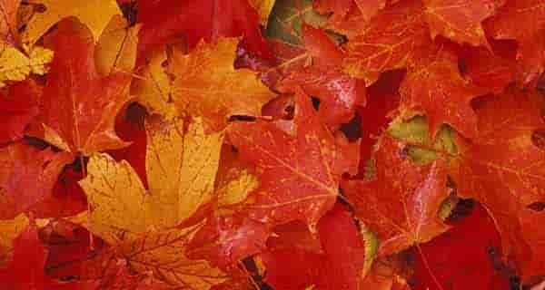 شعر در مورد برگ پاییزی