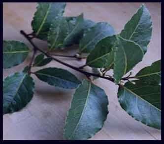 خواص برگ بو ،خواص برگ بومادران،خواص برگ بو در طب سنتی،خواص برگ بو چیست
