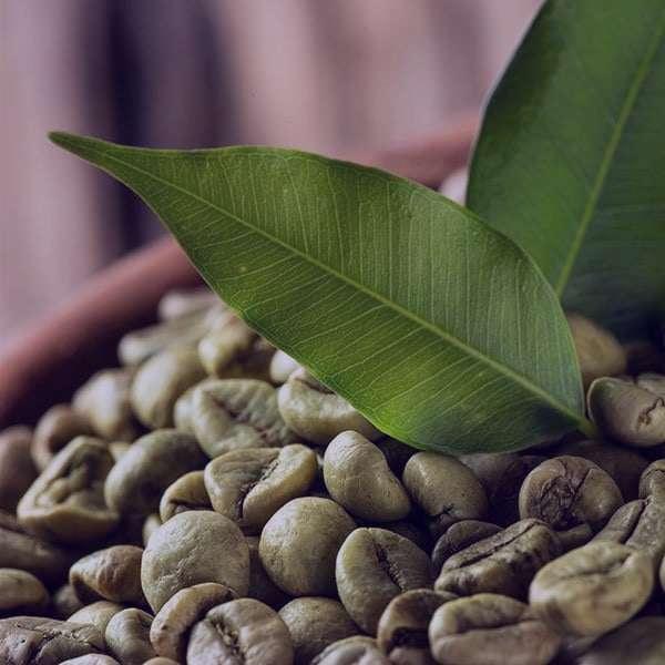 مضرات و عوارض قهوه سبز در بارداری و لاغری
