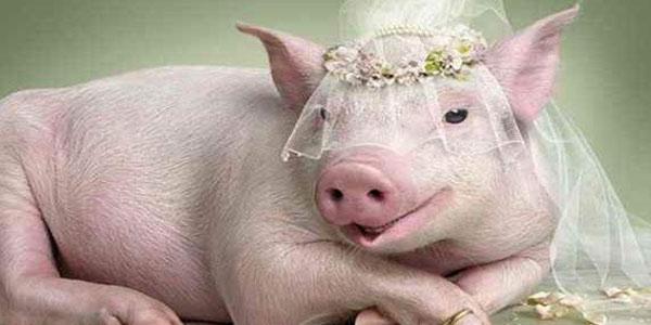 گوشت خوک , گوشت خوک حلال , گوشت خوک از نظر پزشکی , گوشت خوک و شراب