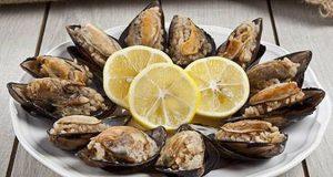 همه چیز درباره خواص و حکم مصرف گوشت صدف دریایی
