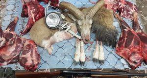 حکم و خواص خوردن گوشت شکار در دوران بارداری چیست