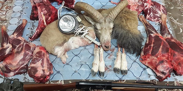 گوشت شکار حلال است , گوشت شکار , گوشت شکاری , گوشت شکار در بارداری
