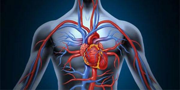 شریان و ورید چیست , فرق شریان و ورید چیست , فرق بین شریان و ورید چیست , شریان و ورید بند ناف