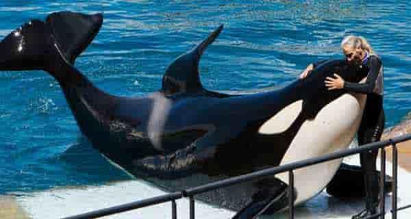 گوشت نهنگ , گوشت نهنگ حلال است , گوشت نهنگ حلال است یا حرام , گوشت نهنگ خوردنی است