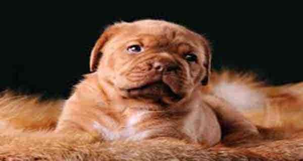 اسم سگ ، اسم سگ ماده ، اسم سگ نر ، اسم سگ ترکی ، اسم سگ ایرانی