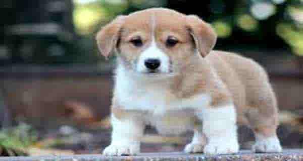 چرا سگ نجس است ، علت نجس بودن سگ ، نجس بودن سگ در قرآن