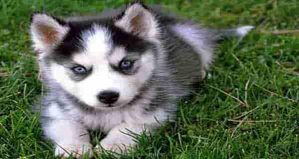 شعر حافظ در مورد سگ ، شعر سعدی در مورد سگ ، شعر مولانا در مورد سگ