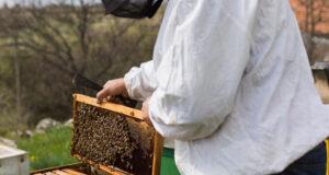 راهنمای خرید عسل: هنگام خرید عسل به چه نکاتی باید توجه کرد؟