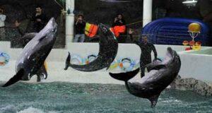 دلفین های رقاص در جزیره کیش